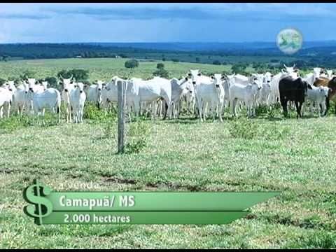 FAZENDA À VENDA EM CAMAPUÃ / MS COM 2.000 HECTARES