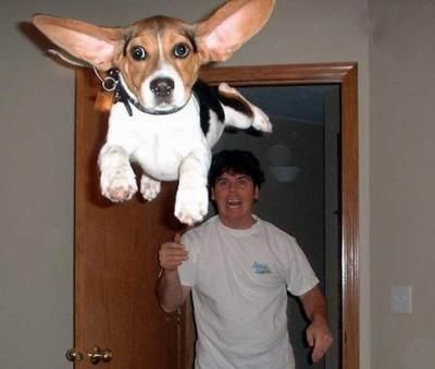 Best Dogs Can Fly Images On Pinterest Dogs Friends And Gardens - Photographer proves dogs can fly with funny perfectly timed photos