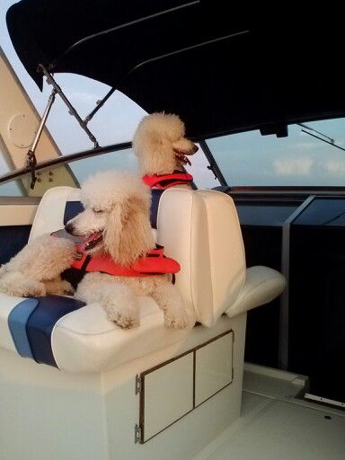 """The captain and skipper!"" - Harry and Coco"