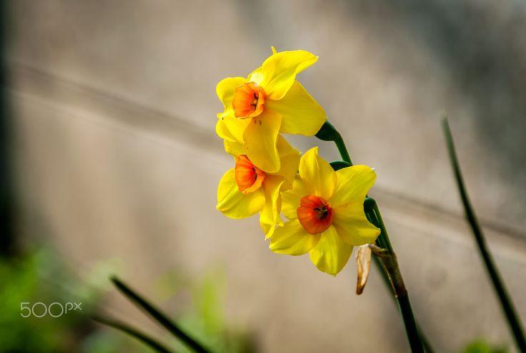 Yellow - null