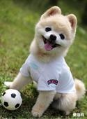 Dog also can play football