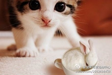 What are u two doing?Rabbit, Cute Animal, Cat, So Sweets, Pets, Kittens, Bunnies, Furries Friends, Kitty