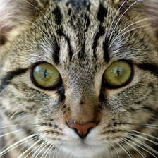 Wood Green, The Animals Charity is supporting a campaign by the Cat Charity International Cat Care to warn people of the dangers of using a dog flea treatment on their cats. http://www.woodgreen.org.uk/news/2925_cats_at_risk_from_dog_flea_treatment