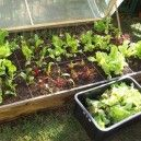 Square Foot Gardening Workshop - Learn how to grow #organic veggies easily in containers!