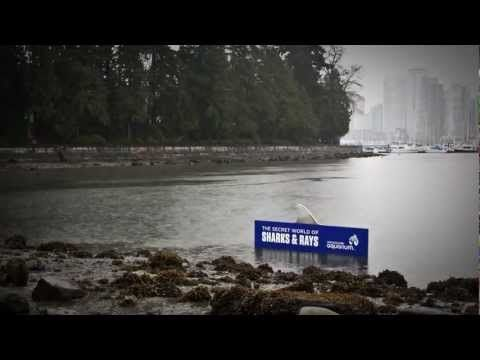 A Shark Sighting in Stanley Park