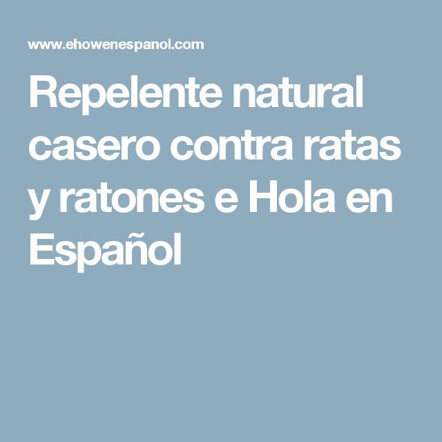 Repelente natural casero contra ratas y ratones e Hola en Español