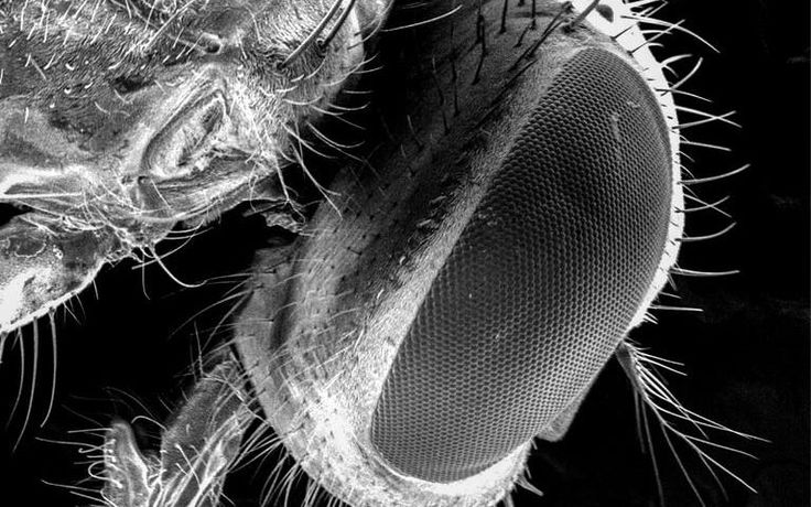 Don't eat food if a fly lands on it, as they carry more dangerous bacteria than previously thought, warn scientists
