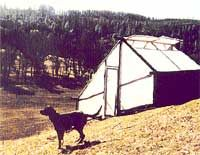 A greenhouse can be a reliable source of fresh winter food, and this low-cost greenhouse made with pine poles is a great DIY option. Originally published as