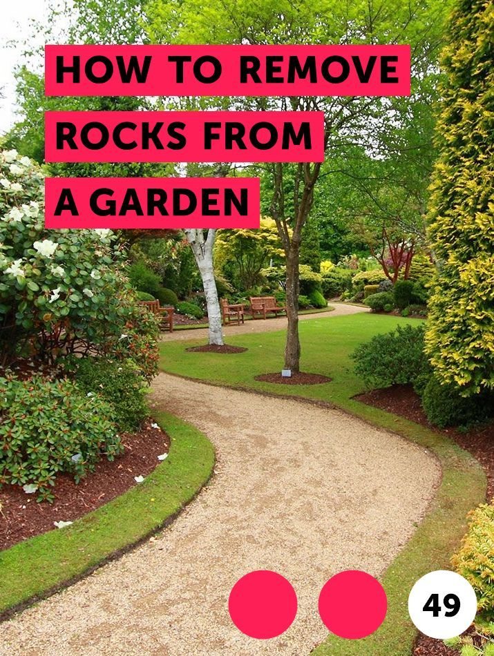 How To Remove Rocks From A Garden Getting Rid Of Skunks Home Vegetable Garden Skunk Repellent