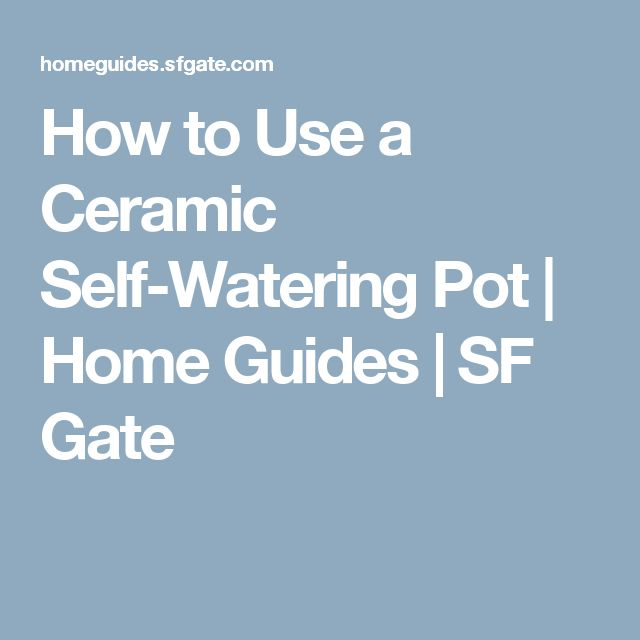 How to Use a Ceramic Self-Watering Pot | Home Guides | SF Gate