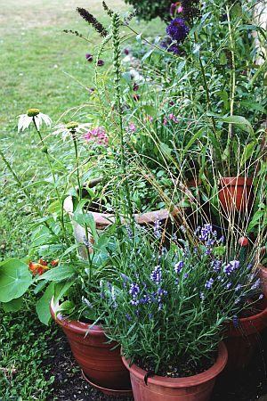 Topfgarten forever – überwinternde Pflanzen für Balkonien und Terrassien - http://www.tinto.de/tipps/topfgarten-uberwinternde-pflanzen-balkonien-und-terrassien/  #topfgarten #überwinterung #pflanzen