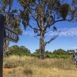 Cellar door cycling tours on the Murray to Mountains Rail Trail