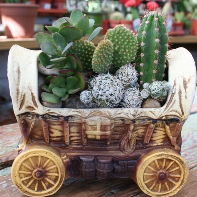 Cactus Wagon Fancy!
