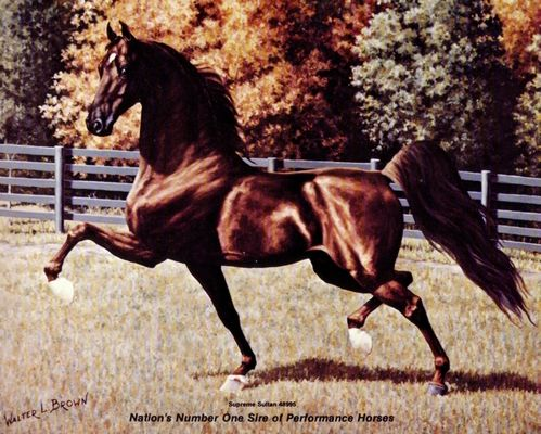 Saddlebred horses are born this way! Beautiful, showy, and a pleasure to be around. Love. Ride. Own. An American Saddlebred. Supreme Sultan.