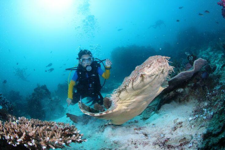 Raja Ampat Live On Board - Wobbegong Shark
