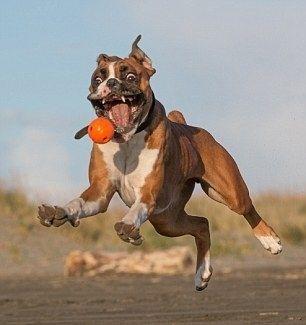 Les 60 chiens les plus heureux sur Internet