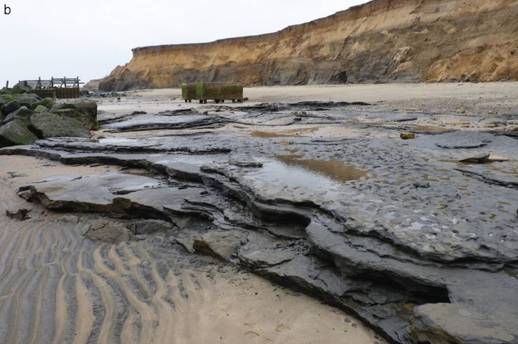 The earliest human footprints outside of Africa have been uncovered, on the English coast, by a team of scientists led by Queen Mary University of London, the British Museum and the Natural History Museum.    Up to five people left the series of footprints in mud on the bank of an ancient river estuary over 800,000 years ago at Happisburgh in northeast Norfolk.