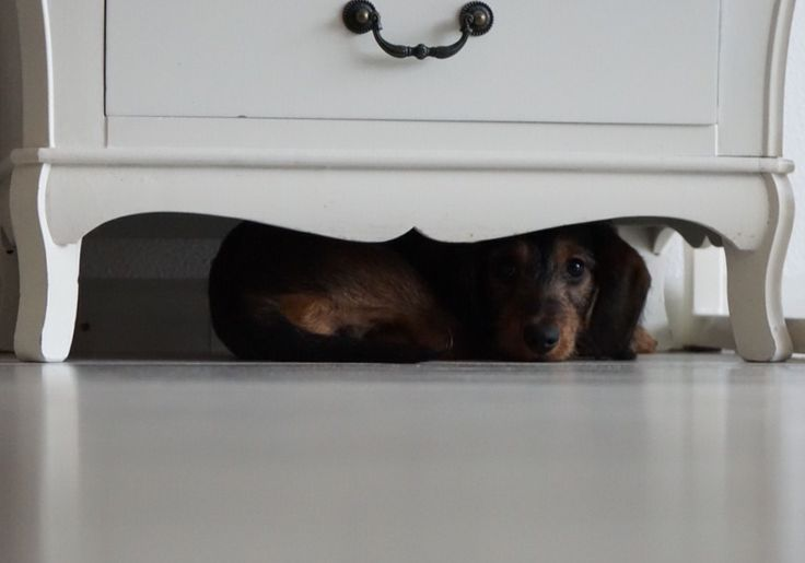 The little monster under the cupboard.