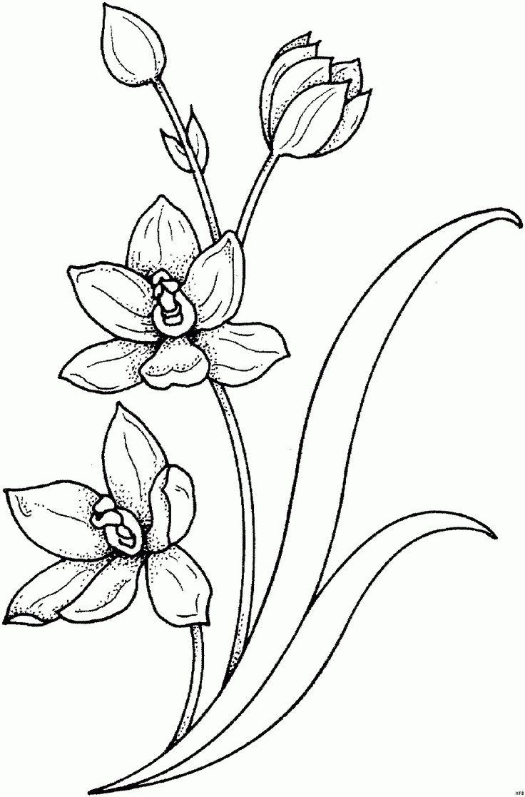 10 Großartig Malvorlage Blumenranke Gedanke 2020   Tattoo ...