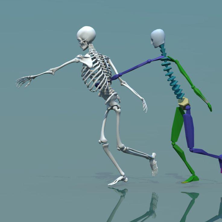 25+ best ideas about human skeleton 3d on pinterest | human, Skeleton