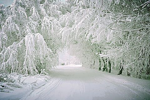 The Tunnel of Trees, near Petoskey, Michigan