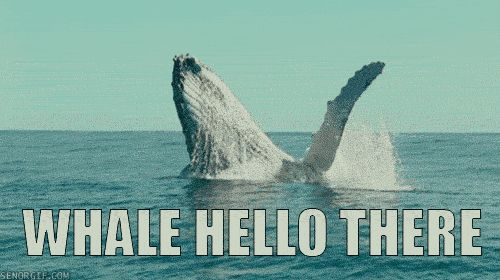 Animal puns: nature's greatest achievement since narwhals.