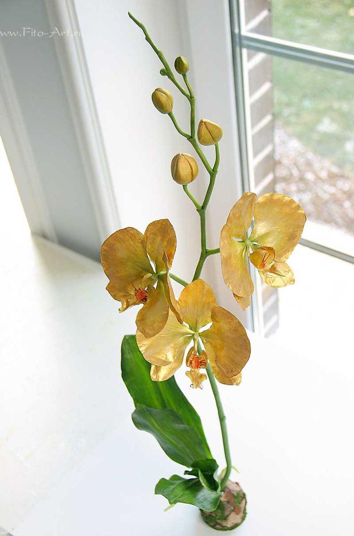 Какие горшки нужны для орхидей фото комплекты