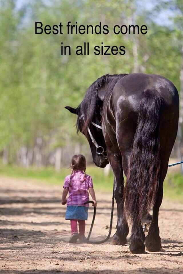 Horse quote pic, Friends come in all sizes