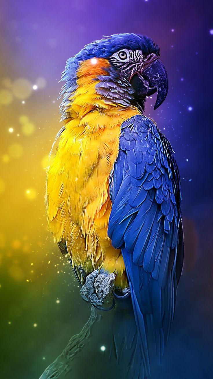 Картинки обои на айфон попугаи