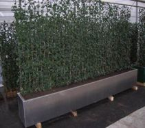 Instant Greening Solutions  http://treebox.co.uk/products/green-screens.html#