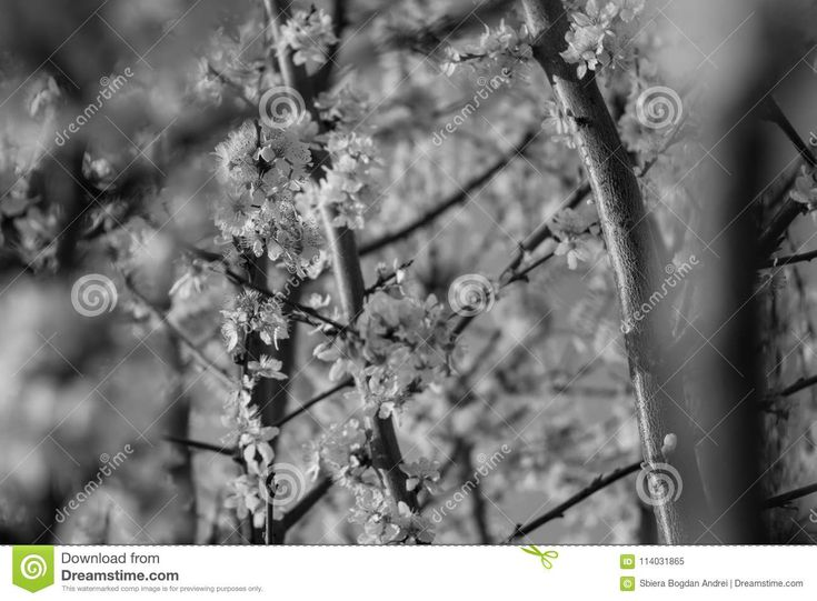 Photo about This is one of the reasons why spring is brilliant. Image of tree, flowers, beautiful - 114031865