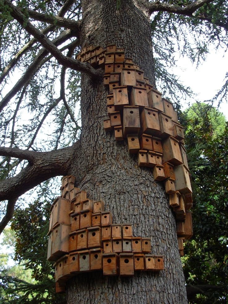 Villa Montalvo, Saratoga, CA - art installation 2011