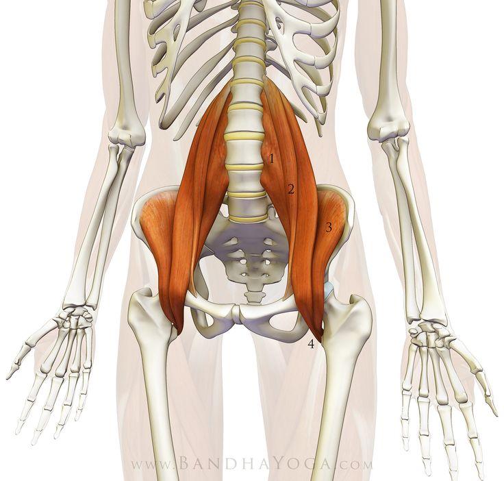 The Diaphragm-Psoas Connection