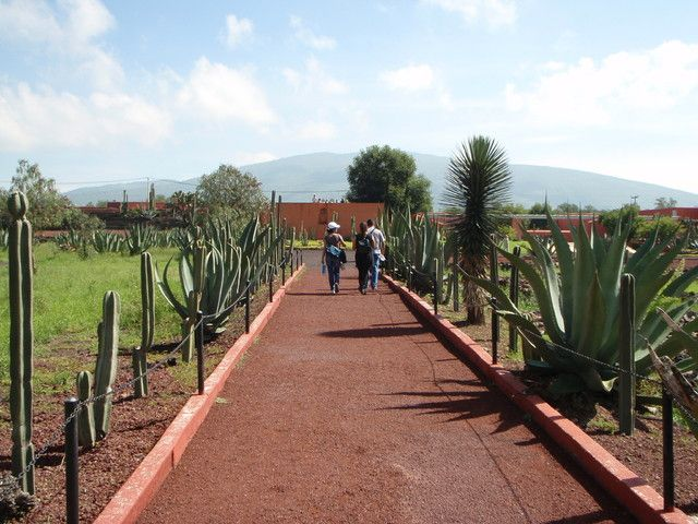 Mexico City: Hidden Teotihuacan Tour and Family Dinner