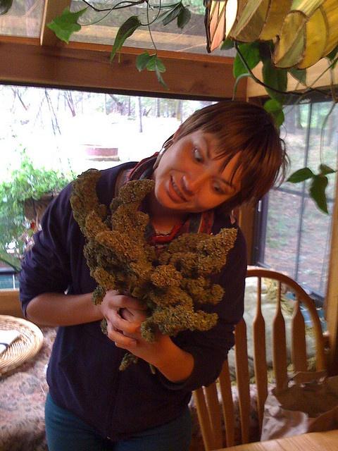 #wheretobuycannabisseeds