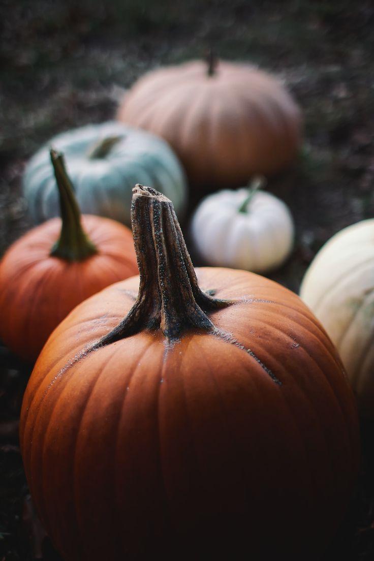 gorgeous fall pumpkins - Fall Pumpkins