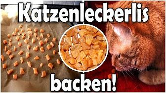 5 Hacks: Katzenspielzeug aus Klopapierrollen basteln - YouTube