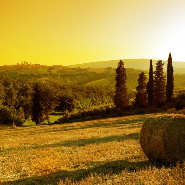 Tuscany Piedmont Wine & White Truffle  WINE AND WHITE TRUFFLE DISCOVERING THE #TUSCAN COAST , HOMELAND OF TOP SUPERTUSCANS AND #PIEDMONT BAROLO AND BARBARESCO  Middle October – End November For more details please contact us! http://bit.ly/2iB43E1