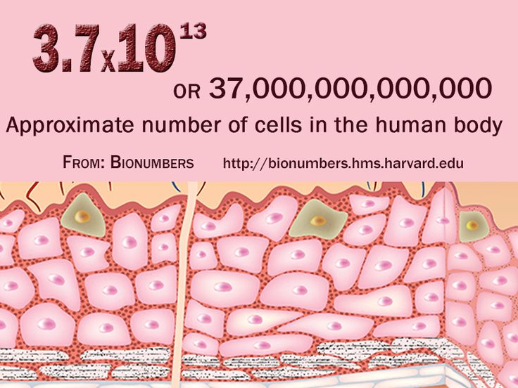 7 best science numbers images on pinterest, Human Body