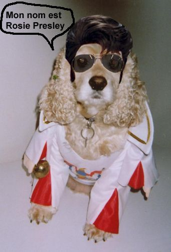 I just entered my pet in the Nutrience Halloween Costume Contest! Please vote and help us win a Nutrience prize!