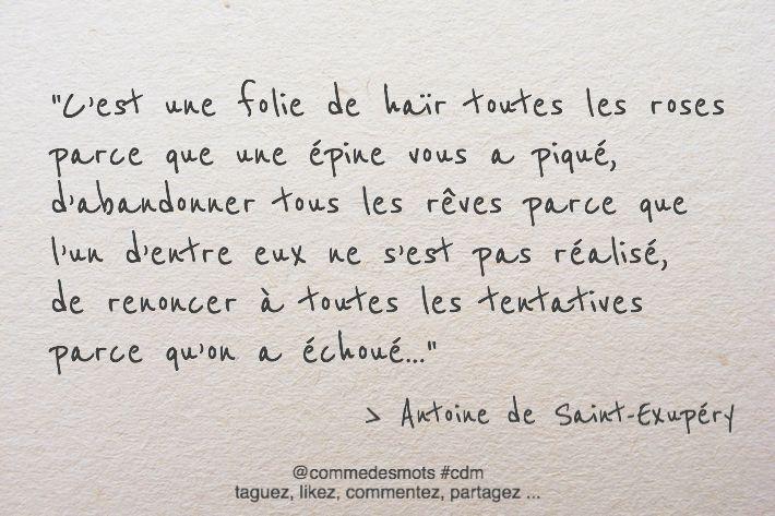"""""""C'est une folie de haïr toutes les roses parce que une épine vous a piqué, d'abandonner tous les rêves parce que l'un d'entre eux ne s'est pas réalisé, de renoncer à toutes les tentatives parce qu'on a échoué…"""" #citation #AntoinedeSaintExupéry #rose"""
