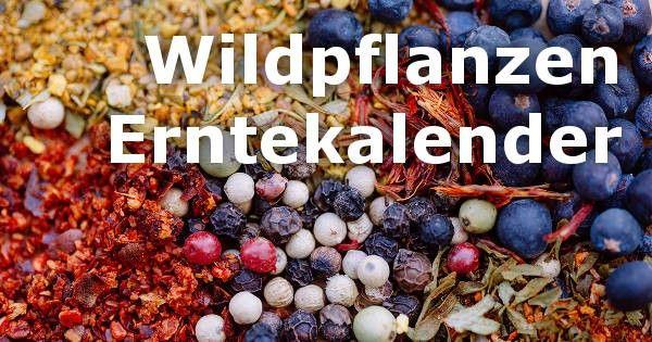 Wildpflanzen Erntekalender: Kräuter, Bäume, Obst & mehr - smarticular.net