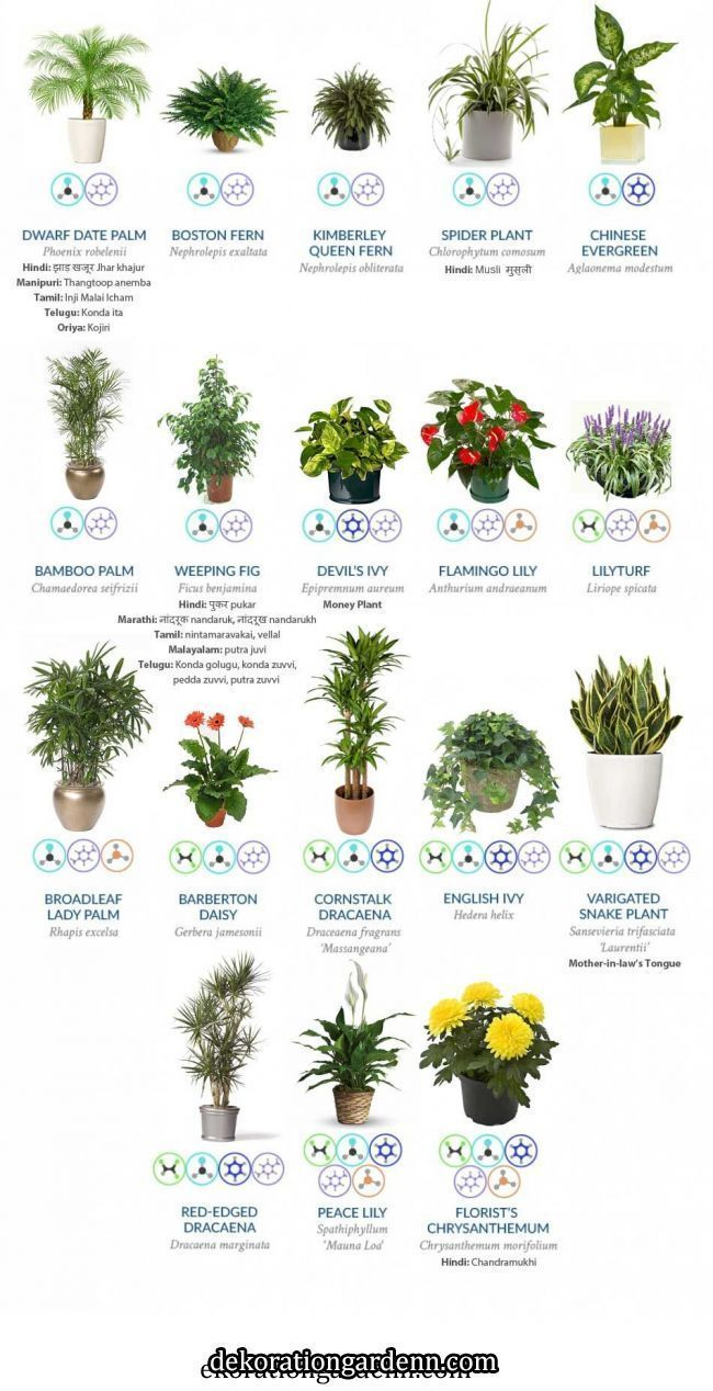 Buy Amazon Amzn To 31bcjok Indoor Plants That Guarantee To Purify The Air In Your House Indoor Plants Tha Skincare S Plants Air Cleaning Plants Indoor Plants