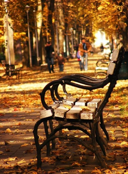 Autumn in Baia Mare