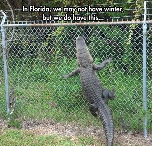 This is why I don't live there #florida #funny #meme