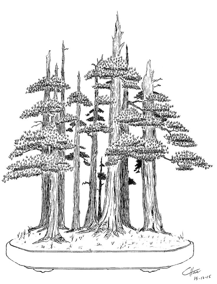 308 best bonsai style  paint and sketch images on