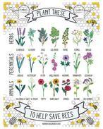 Het gaat niet goed met de bij. Gelukkig kunnen we allemaal een steentje bijdragen door planten in onze tuinen te zetten die goed zijn voor bijen.          Kruiden: lavendel, kattenkruid, salie, koriander, tijm, venkel en bernagie      Vaste planten: krokus, boterbloem, aster, Alcea, anemoon, sneeuwklokjes, Geranium      Eenjarigen: goudsbloem, schildzaad, klaproos, zonnebloem, Zinnia, kattensnor, heliotroop    De print in de Etsy shop van Hannah Rosenbergen.