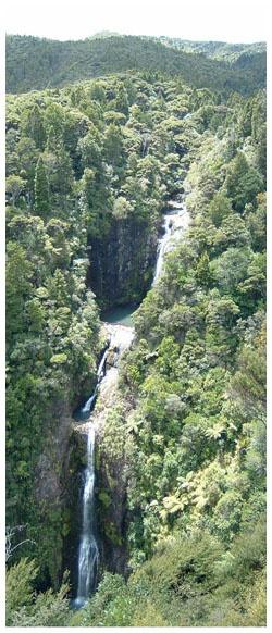 Abseiling down a canyon to Piha Beach North Island NZ