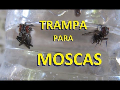 Las 25 mejores ideas sobre trampas para moscas en for Trampas para ratones sin matarlos