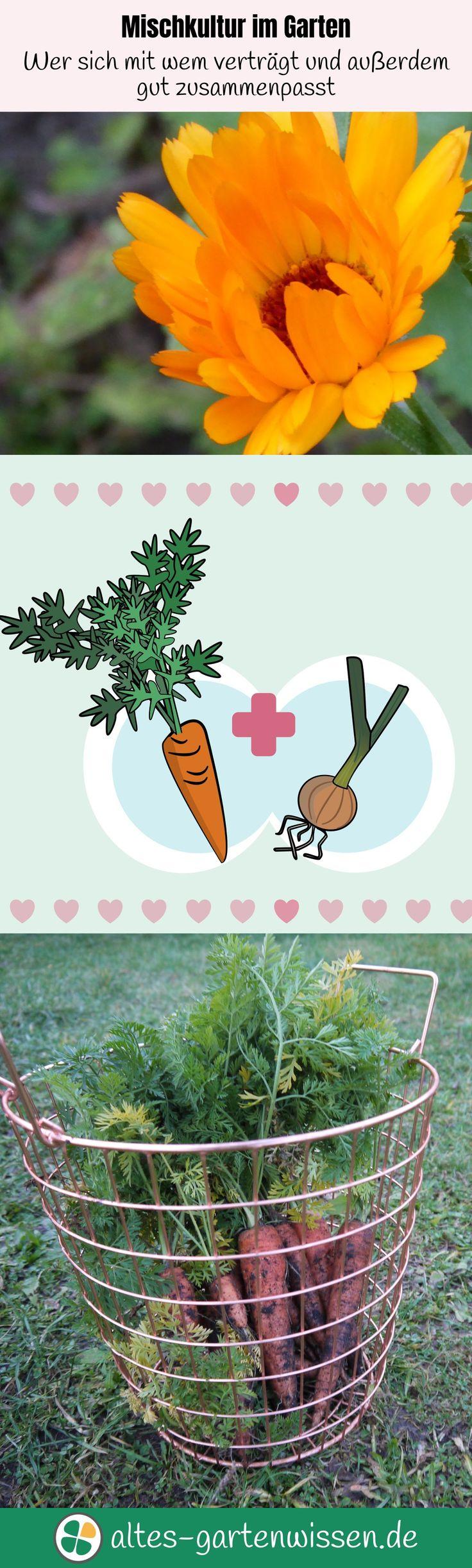 Mischkultur im Garten – Wer sich mit wem verträgt und außerdem gut zusammenpasst